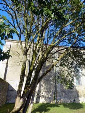 La-Ronde-eglise-76-xb