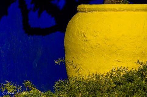 Contraste des couleurs - Jardin Majorelle - Jardin Majorelle