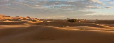Champ de dunes - Erg Chebbi