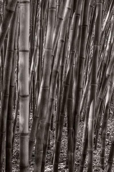 POTD: Bamboo Jungle