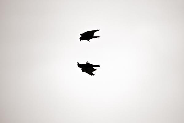 POTD: Aerial Symmetry
