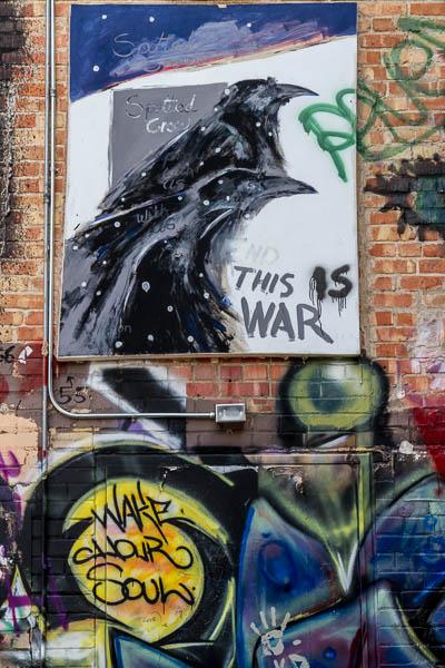 POTD: Warrior Crows