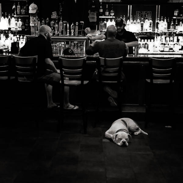 POTD: Pub Dawgs