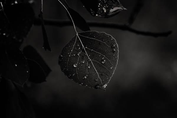 POTD: A Little Rain