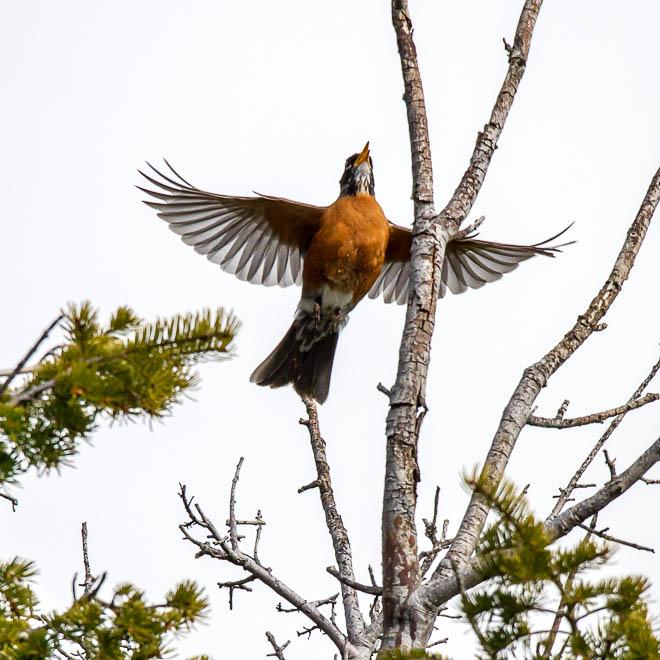 POTD: Spread Eagle