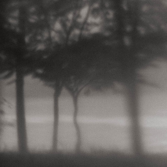 POTD: Four Trees Passing