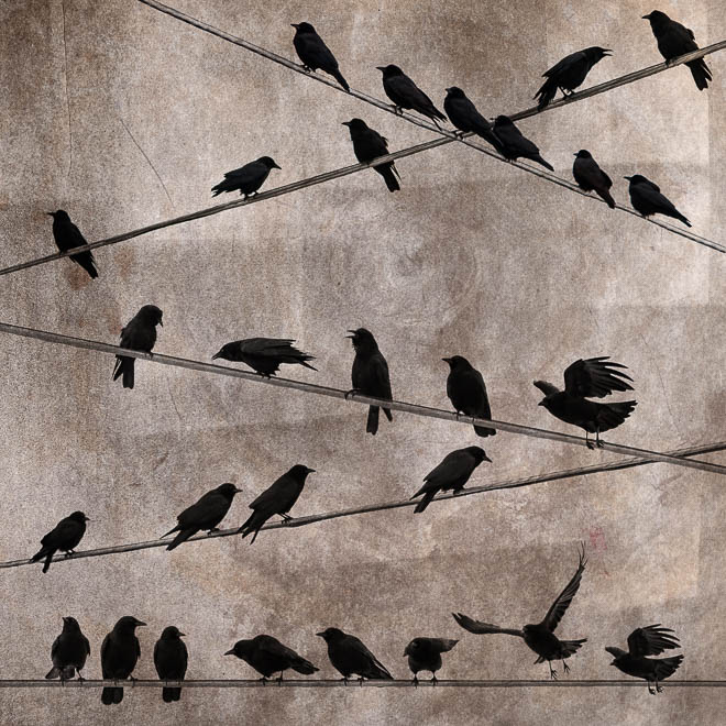 POTD: The Roost