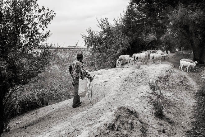 POTD: The Sheepherder