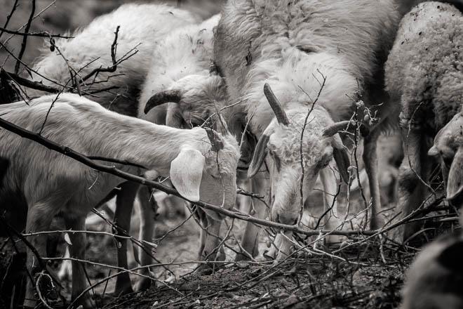 POTD: The Flock