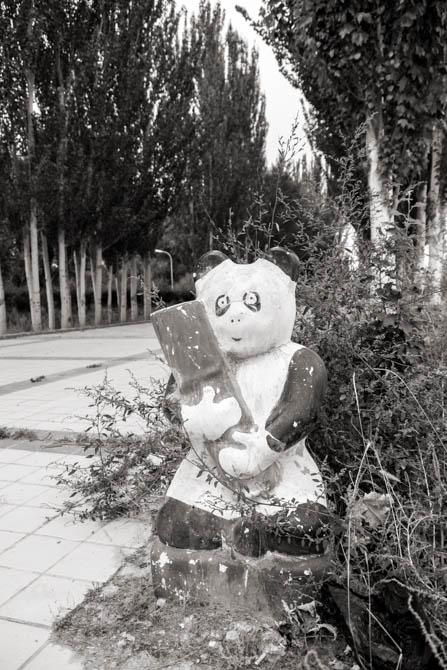 POTD: Forlorn Panda
