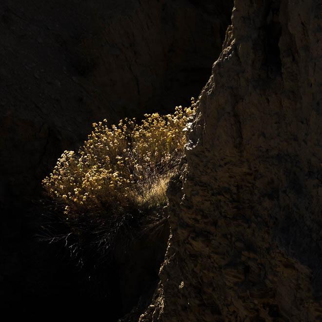 POTD: Wallflower