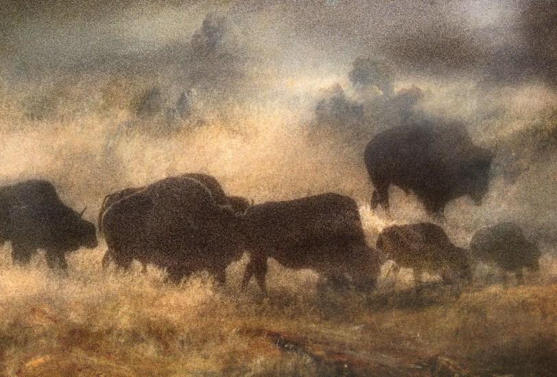 Turner in Yellowstone