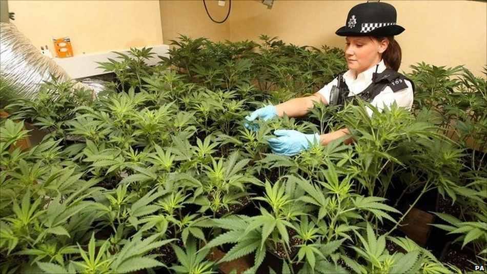 El Reino Unido regula el cannabis terapéutico