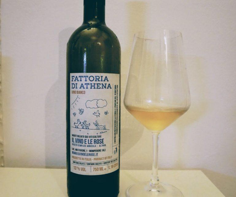 Il vino e le rose – Fattoria di Athena