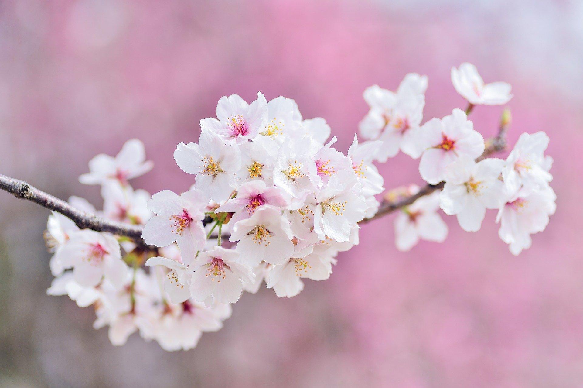 haikus de primavera