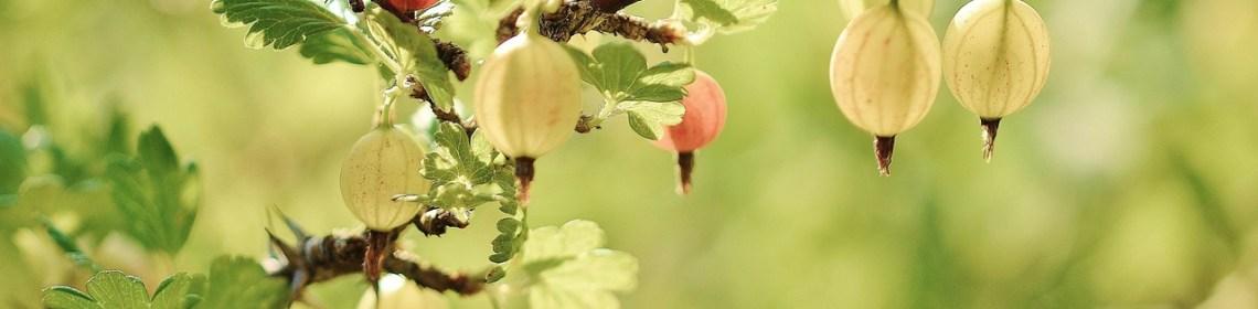La slow life cultiver son jardin en pleine conscience - Il faut cultiver son jardin voltaire ...