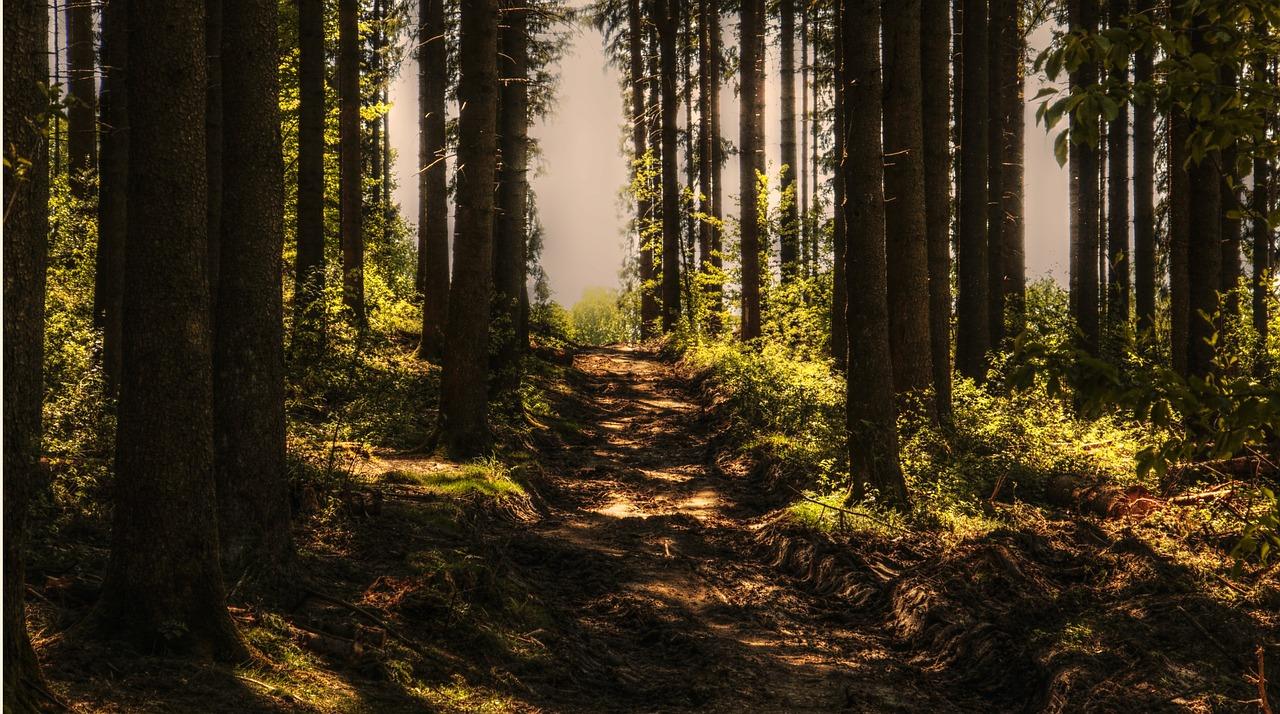 Sylvothérapie : un bain de forêt !