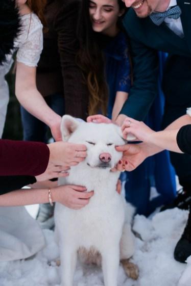 Caresses chien blanc