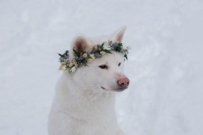 Chien avec une couronne de fleurs