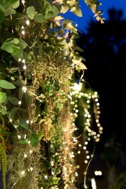 Lumière et végétation