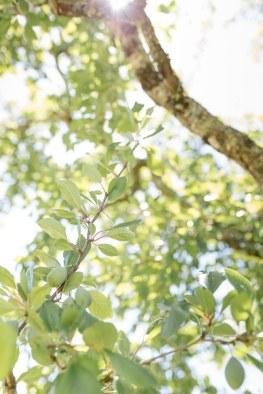 branche-de-feuilles