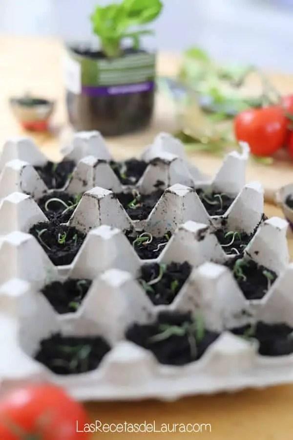 Germinar tomates en casa