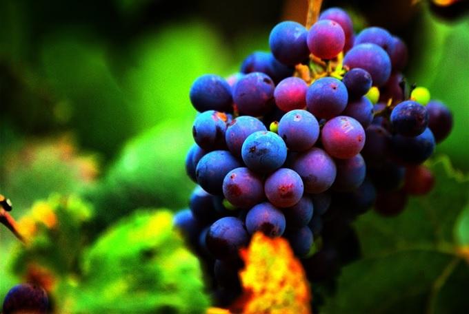 vinoterapia-1
