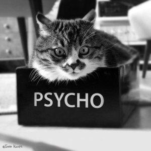 gattostressato