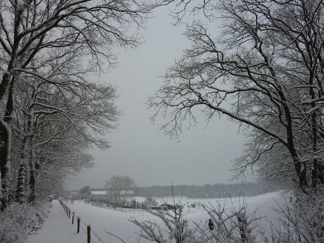 Walking in a winter wonder land..