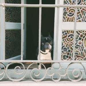 Los perros de Málaga