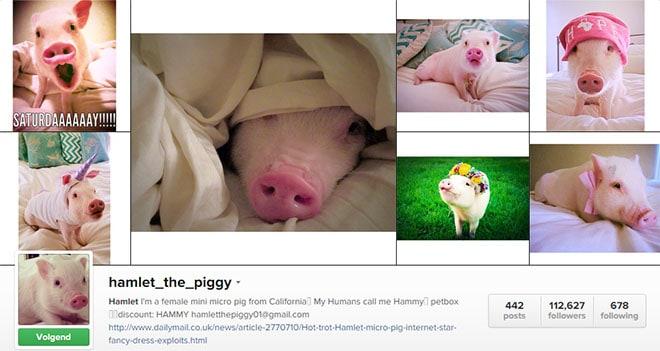 insta_hamlet_the_piggy