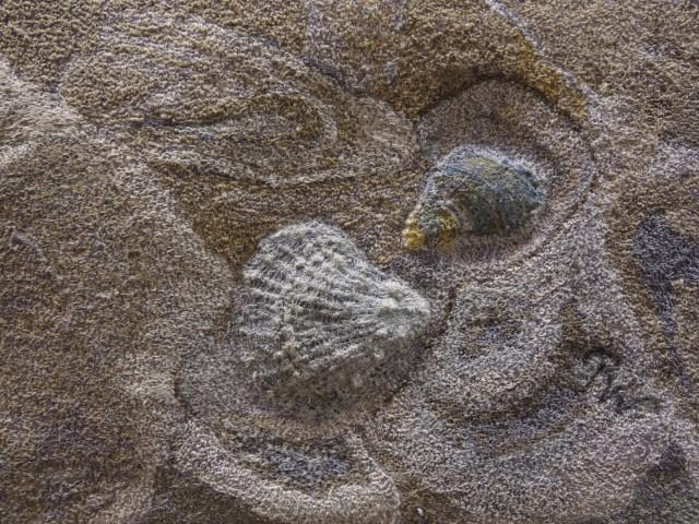Renate Wilde - Kleines Strandstuck - Detail_R