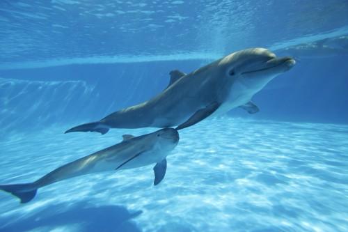 dolphin mum