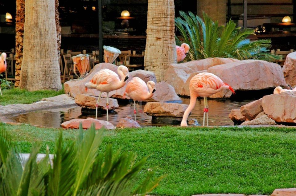 Flamingo's Wildlife Habitat Las Vegas