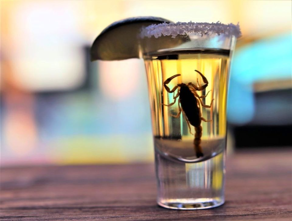 Nacho Daddy Las Vegas Scorpion Shot