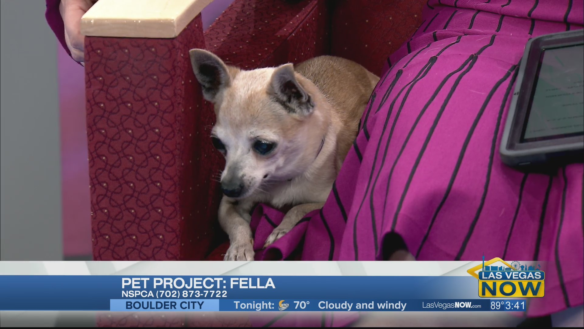 Fella the dog is looking for a forever home