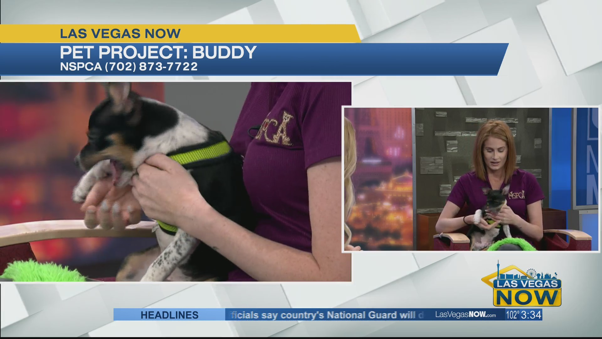 Buddy the dog needs a forever home