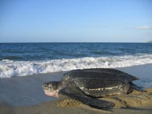 Turtle - CICTMAR.jpg - compressed