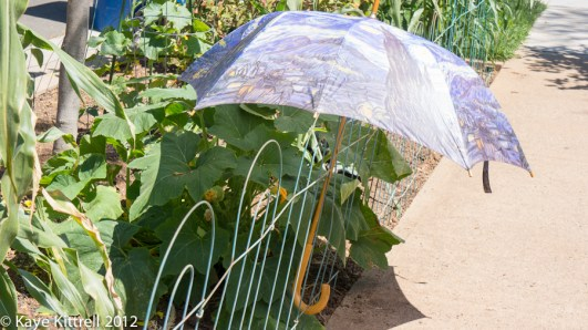Patty Pan Squash-umbrella