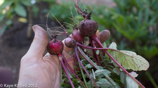 About the radishes - small radishes