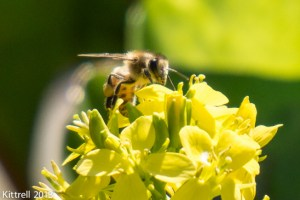 If Bees Are Imperiled, So Are Humans