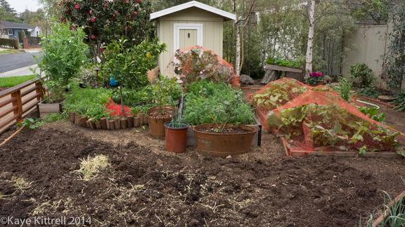 After the rain-garden
