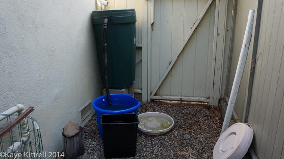 After the rain-rain barrel