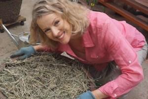 Growing Garlic in an Urban Garden