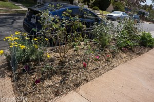 Planting my Parkway Food Forest