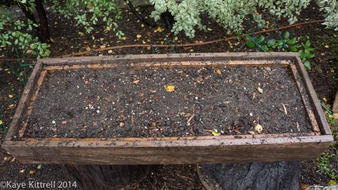 Make the most of the rain event, plant! - Mizuna container