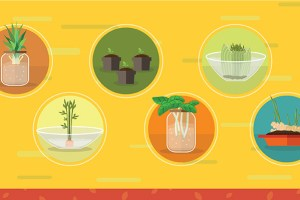 Save Time and Money Regrowing Food