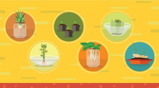 Save Time and Money Regrowing Food - header