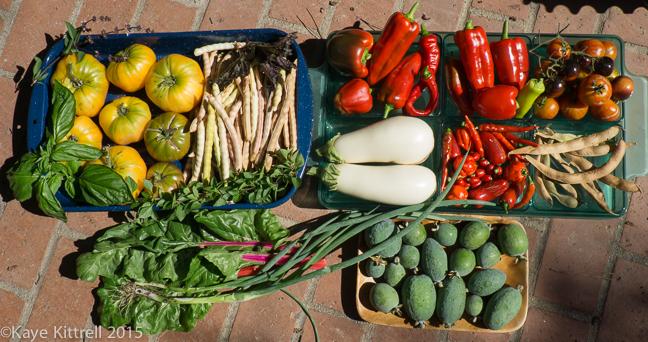 100% Homegrown Soup - harvest
