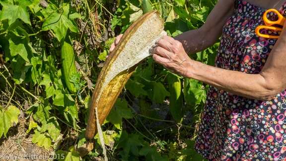 Files from the Road: Growing Loofah - Peeling loofah